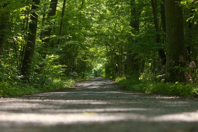 Bei einem Spaziergang in Riddagshausen kann ich herrlich abschalten. Foto: Gerald Grote