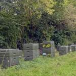 So sieht eine moderne Kolonie aus Styropor-Bienenstöcken aus. Der Vorteil: Man kann sie hübsch bemalen. Foto: BSM