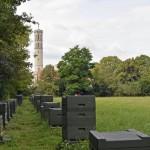 Im Bürgerpark steht eine Kolonie der Okerbienen. Foto: BSM.