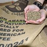 Kaffeebohnen aus Brasilien. Foto: BSM