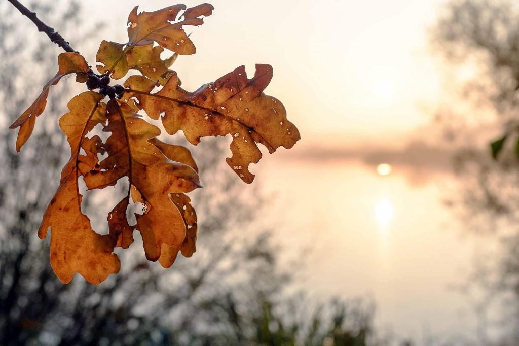 Herbstliches Eichenlaub beim Schapenbruchteich. Foto: Gerald Grote