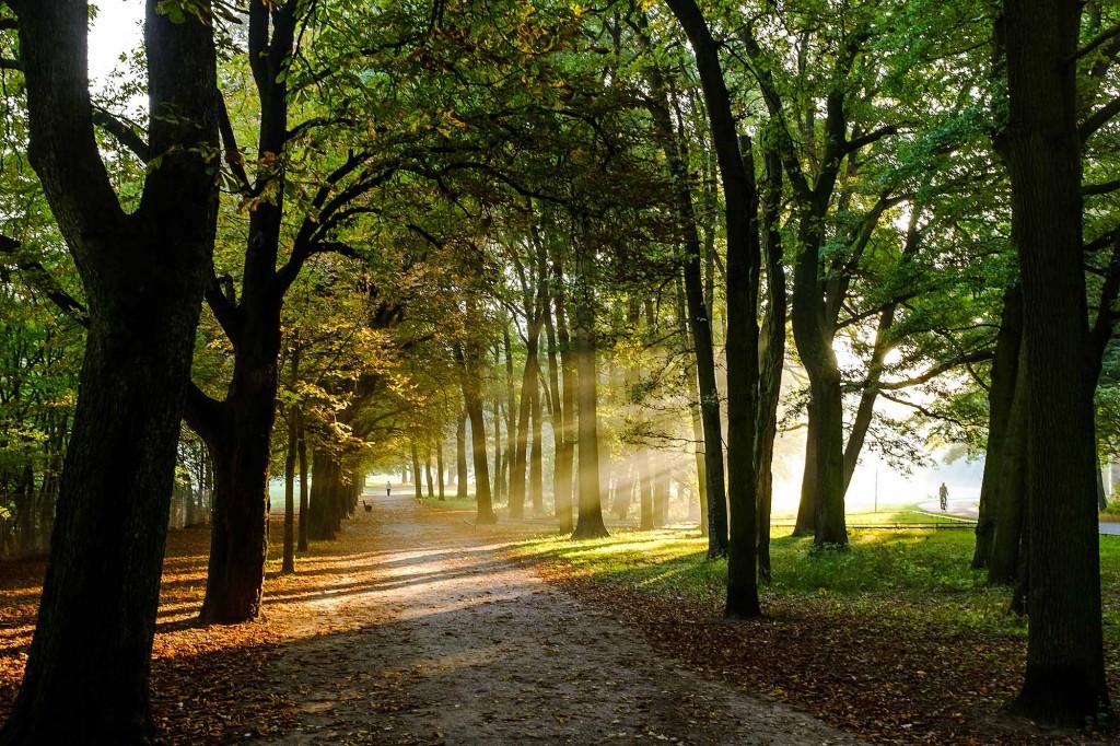 Morgensonne im Prinzenpark. Foto: Gerald Grote
