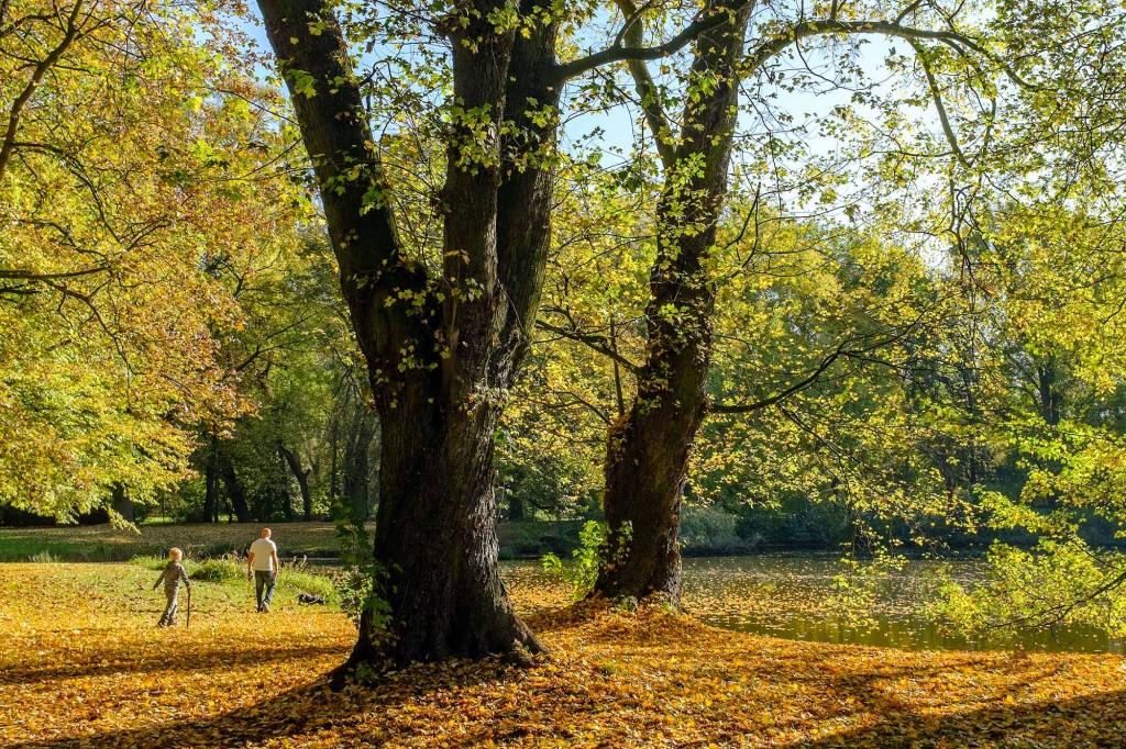Laubbedeckter Boden beim Portikusteich im Bürgerpark. Foto: Gerald Grote