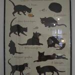 Das Katzenmanifest. Foto: BSM