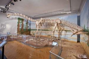 Der Dino sieht zwar friedlich aus, es wird aber angenommen, dass er mit dem langen Schwanz seine Gegner getötet hat. Foto: Marek Kruszewski