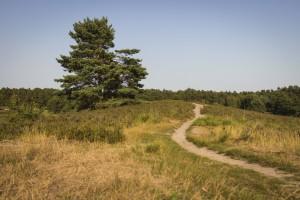 Sandige Wege prägen das Landschaftsbild.