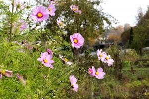 Im Garten ohne Grenzen kann jeder seine Parzelle ganz individuell gestalten.