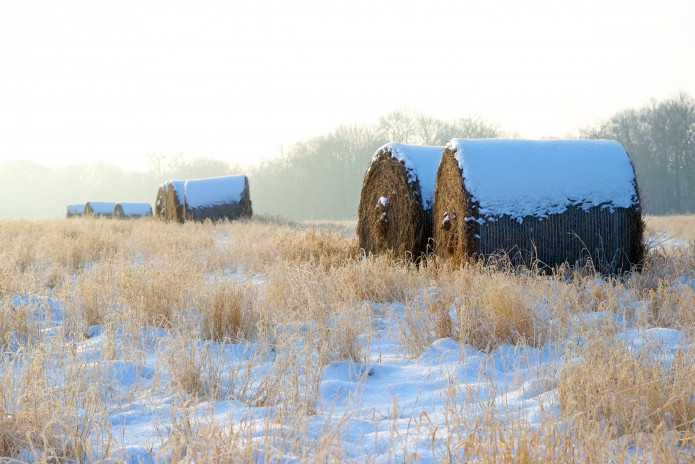 Heu im Schnee 2