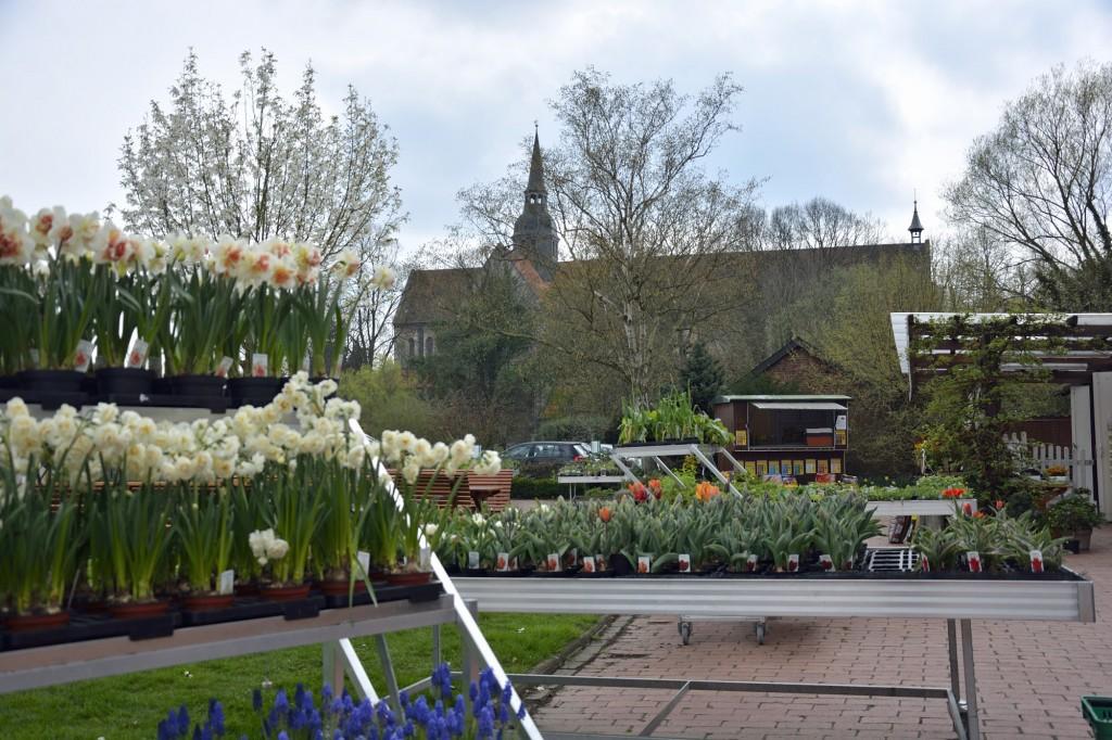 Hier wird der Name der Gärtnerei offensichtlich: Die Klosterkirche Riddagshausen ist immer im Blick. Foto: BSM