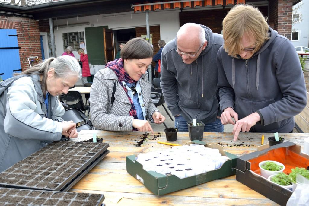Burkhard Bohne (Zweiter von rechts) schaut sich unsere pikierten Pflänzchen genau an. Foto: BSM