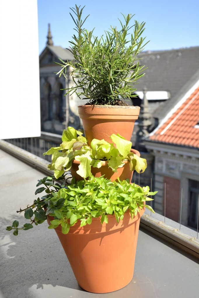 Oregano, Rosmarin, minze und Salat bekommen mit dem Kräuterturm ein kreatives Pflanzgefäß. Foto: BSM