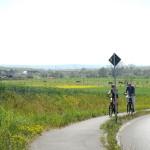 ... Bei der Radtour durch die Felder leuchtet die Landschaft in unterschiedlichsten Grüntönen.