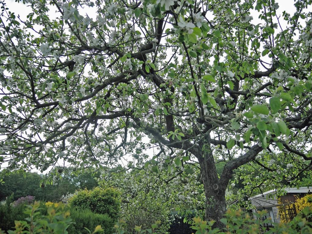 Ein Drittel der Gartenfläche muss bewirtschaftet werden - deshalb blühen gerade viele Obstbäume. Foto: BSM