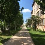 Die gesamte Strecke wird von Bäumen gesäumt. Foto: BSM
