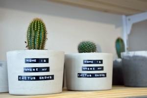 Home is where my cactus grows. Hoffentlich wachsen sie noch lange. Foto: BSM