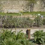 Auch im April ist im Klostergarten schon viel Grün zu sehen. Foto: BSM