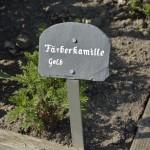 Weniger bekannte Pflanzen wie die Färberkamille...