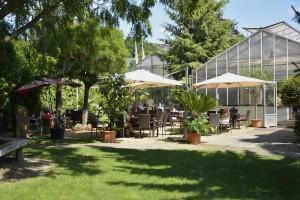 Entspannung unter Palmen im Café Flora. Foto: BSM