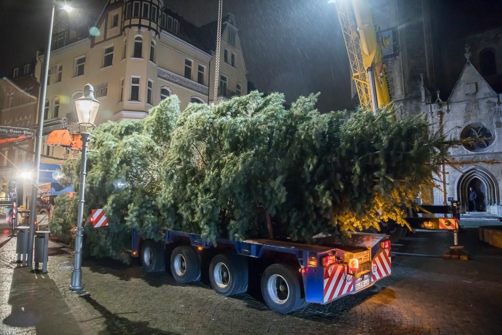 Als Schwertransport mit Polizeibegleitung kommt der Baum am Domplatz an. Foto: BSM/Philipp Ziebart