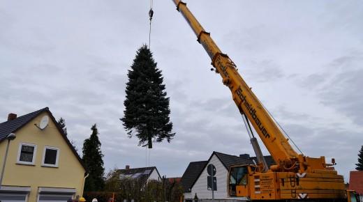 Ein Weihnachtsbaum für den Domplatz