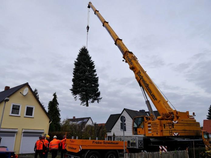 Schwebende Tanne: Der Weihnachtsbaum vom Domplatz am Kran Foto: Braunschweig Stadtmarketing GmbH
