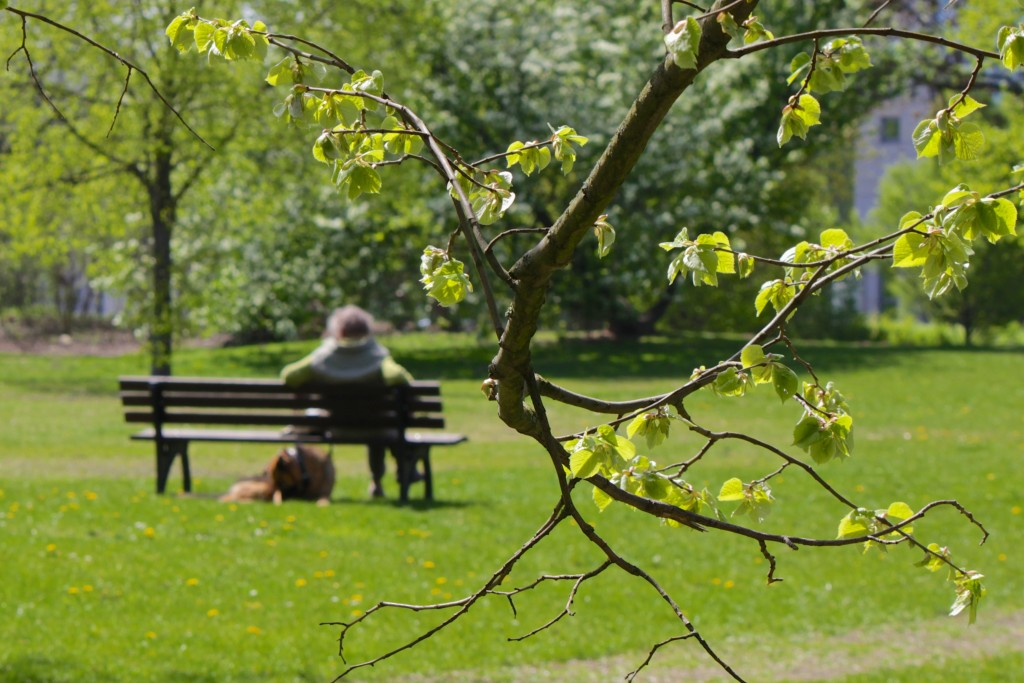 Im Frühling schlagen die ersten Bäume im Bürgerpark aus. Viel Platz, um die Seele baumeln zu lassen. Foto: BSM/Gerald Grote