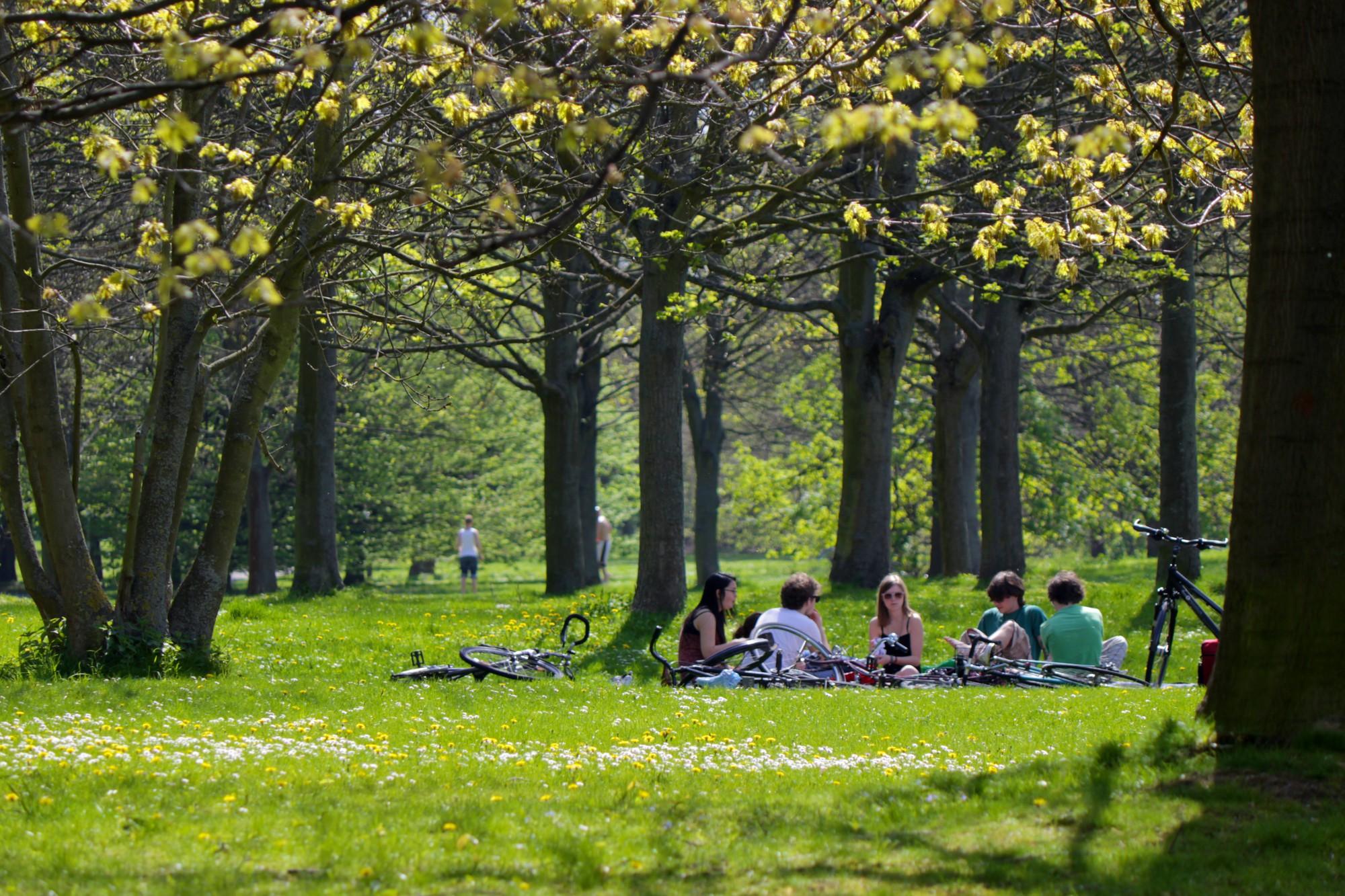 Bei warmen Temperaturen kann man im Bürgerpark spazieren, aber auch wunderbar picknicken. Foto: BSM/Gerald Grote