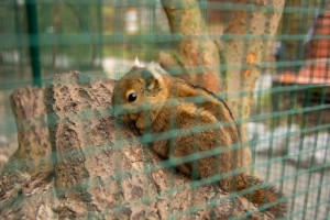 Die kleinen Baumstreifenhörnchen sind noch recht neu im Zoo. Foto: BSM