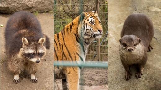 Tiger, Waschbär, Fischotter und Co.