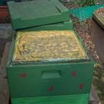 Nimmt man den Deckel des Bienenstocks ab, kann man tausenden von Bienen bei der Arbeit zusehen. Foto: BSM