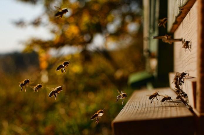 Summ, summ, summ: Bienen im Anflug in den Bienenstock. Foto: pixabay
