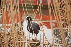 Am Südsee gibt es für Freunde von Flora und Fauna sehr viel zu entdecken. Foto: BSM