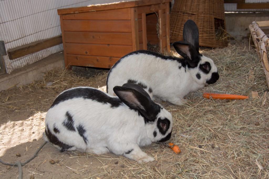 Für flauschige Schützlinge wie diese zwei Hoppler richtet der Tierschutz eine Bescherung an Heiligabend aus. Foto: BSM