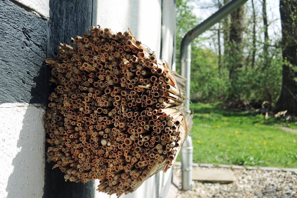 Ein Bündel Schilf tut es auch: Wildbienenhotel für Ungeduldige.