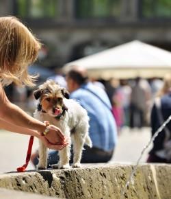 Braunschweig aus Hundesicht