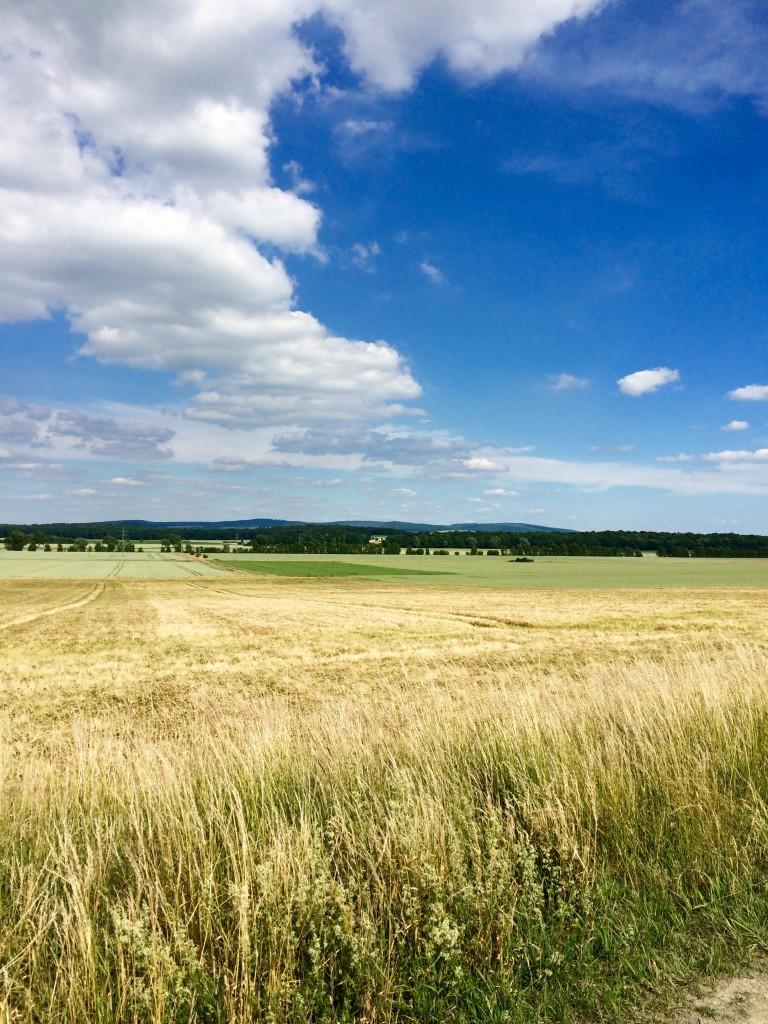 Herrlicher Ausblick auf leicht geschwungene Landschaften. Foto: BSM