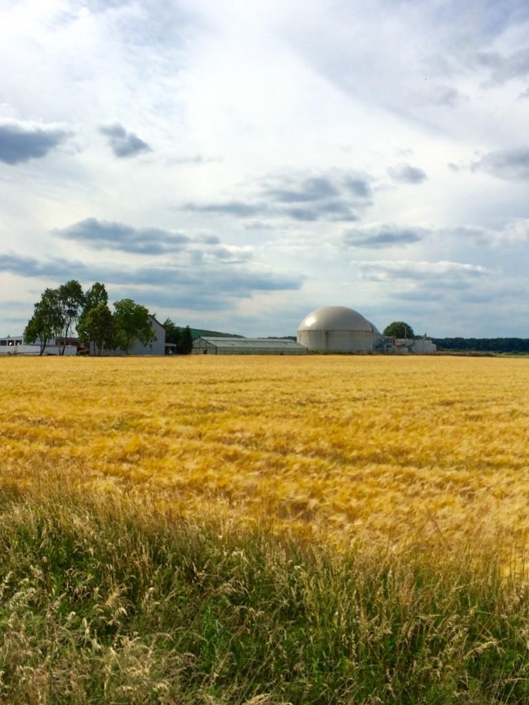Sommer auf den Feldern. Foto: BSM