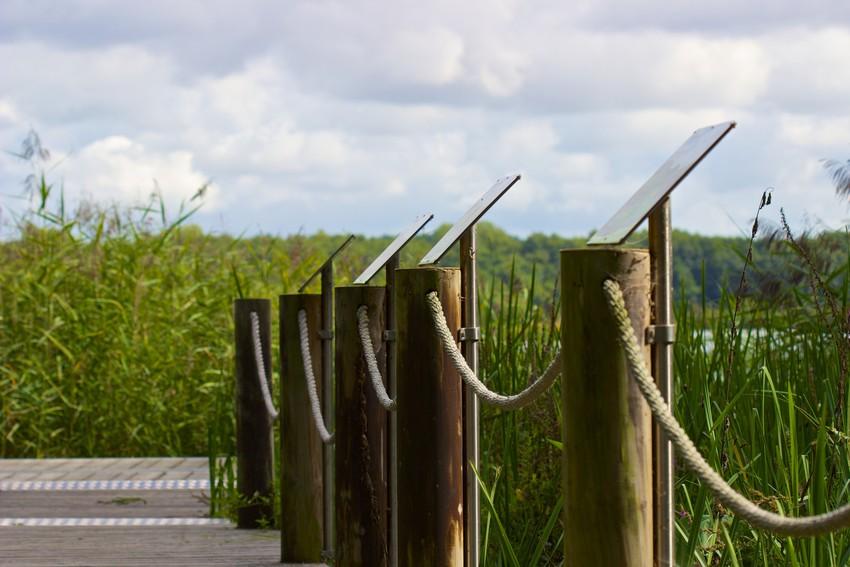 Steg im Naturschutzgebiet Riddagshausen mit erklärenden Tafeln.