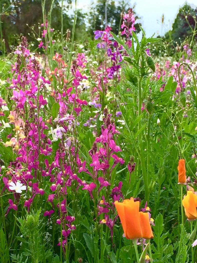 Eine Blumenwiese am Wegesrand. Foto: BSM
