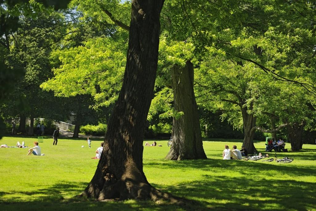 Grüner Rasen und Bäume im Inselwallpark. Verstreut einige Menschen auf der Wiese.