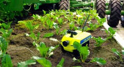 Roboter-Schwärme für die Landwirtschaft