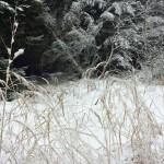 Gräser vor Schneelandschaft. Foto: BSM