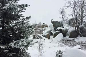 Hasselkopf unter Schnee.