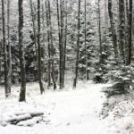 Unterm Schnee: Brücke und Bach. Foto: BSM