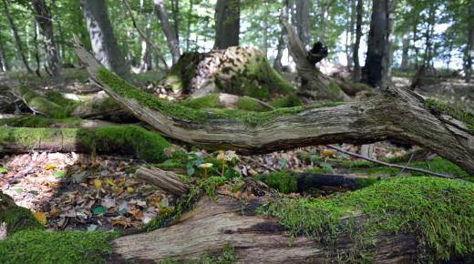 Pilzzeit in Braunschweig und Region