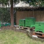 Von außen sehen die Bienenstöcke im Garten von Karsten Höland recht unscheinbar aus. Foto: BSM
