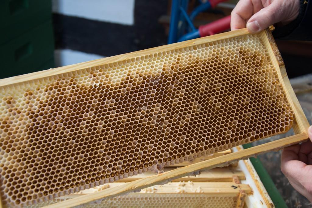 In den Bienenwaben sammeln die Bienen den Nektar. Foto: BSM