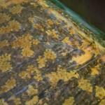 Fleißige Bienen bei der Arbeit. Foto: BSM