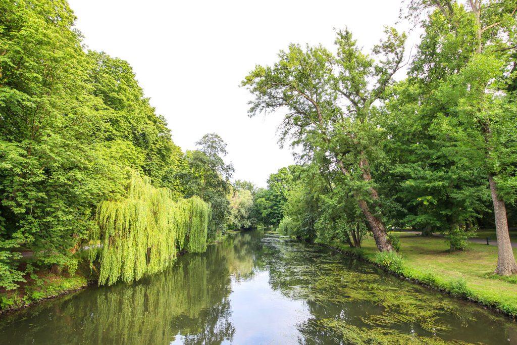 Die Oker mit dicht und grün bewachsenem Ufer.