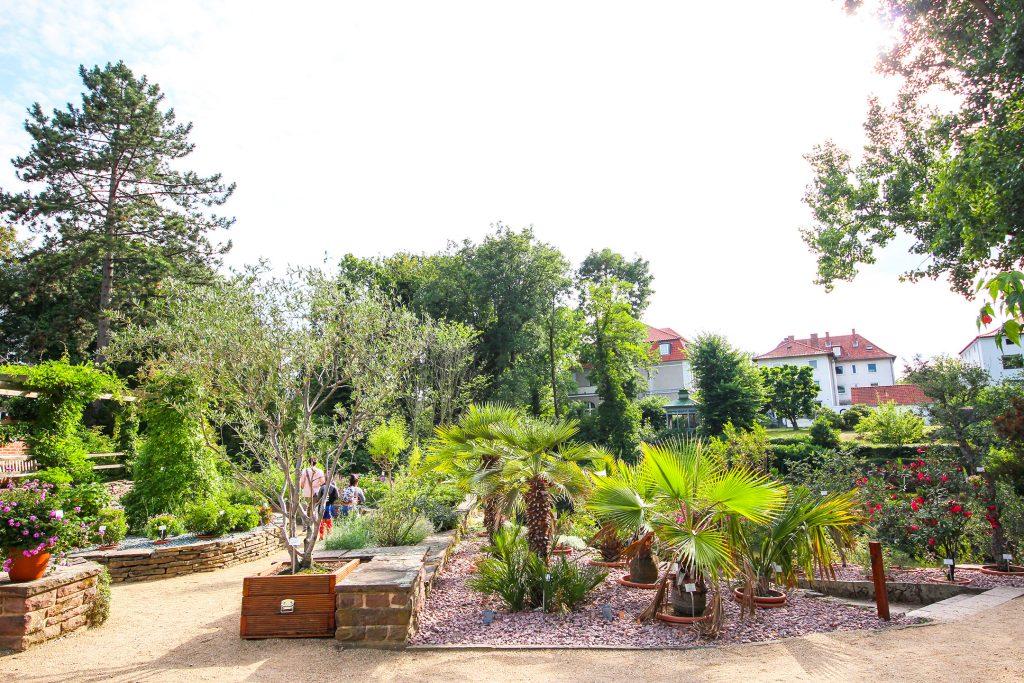 Grüne Palmen im Beet, im Hintergrund eine heimische Tanne und eine Eiche.
